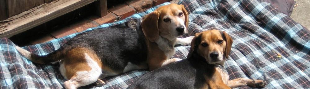 Damn Beagles